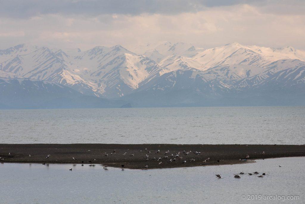 Birds Nesting on Shore of Lake Van